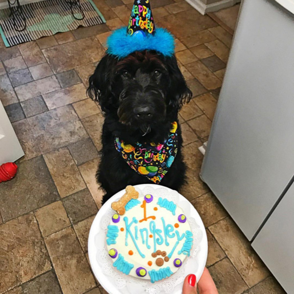 Birthday Cake For Dog Kingsley Charlotte NC
