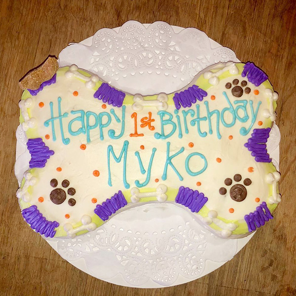 We Also Do Human Gender Reveal Cakes For Dogs To Eat Please Call Inquire Ask Barbara 704 588 3647 Canine Cafe Charlotte