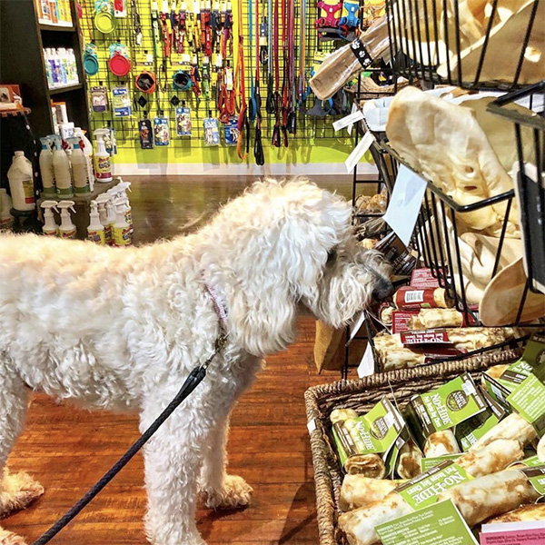 In Vibrant South End Right Off The Light Rail We Offer Best Dog Foods A Range Of Prices And Varieties From Raw Canned To Our Favorite