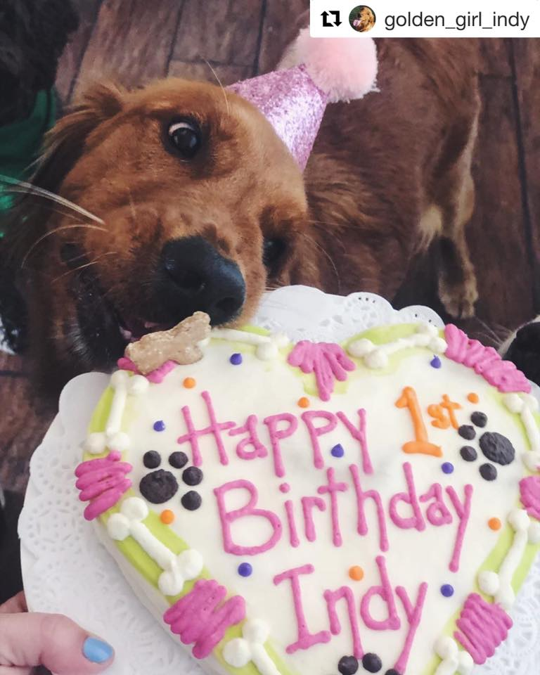 Prime Pawty Cakes Canine Cafe Charlotte Funny Birthday Cards Online Drosicarndamsfinfo